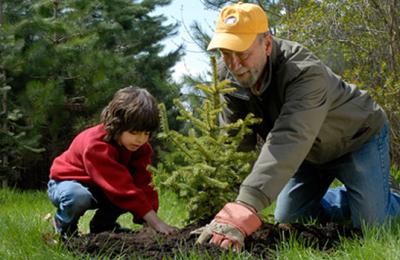 В Южном округе высадят деревья, которые москвичи выбрали на портале «Активный гражданин»