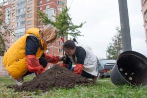ЮАО лидирует среди других округов Москвы по озеленению дворов