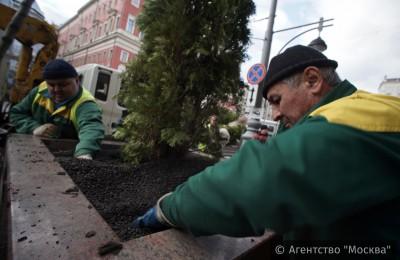 «Активные граждане» поддержали идею появления на столичных улицах деревьев в кадках