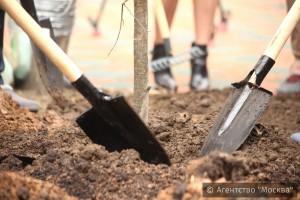 Около 750 деревьев и 29 тысяч кустарников планируется высадить этой весной во дворах ЮАО