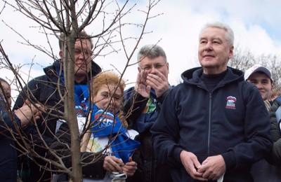 По поручение Собянина высадят новые деревья взамен уничтоженных ураганом