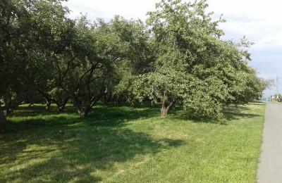 В Нагатинской пойме сохранят большую часть деревьев