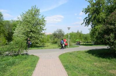 Деревья в столичных парковых зонах планируется проверить на аварийность с помощью эко-патрулей