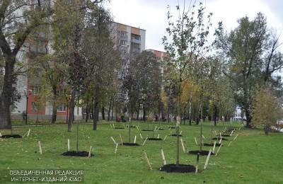 Ель, каштан и береза: жители юга столицы выбрали деревья для высадки во дворах