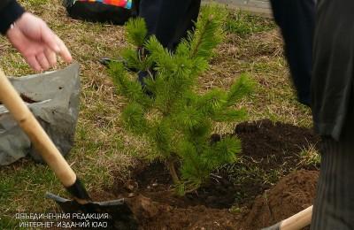 Свыше 450 новых зеленых насаждений появилось в районе этой осенью