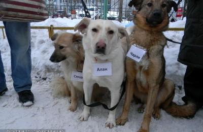 Жители района смогут помочь животным из приюта «Бирюлево»