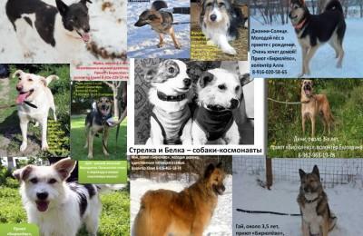 Выставка-пристройство «Космические собаки» пройдет в библиотеке №162
