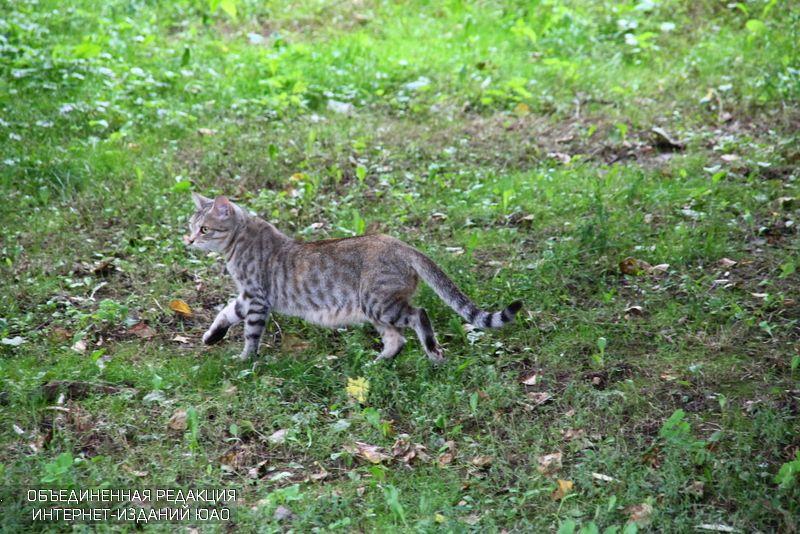 Всемирный день кошек отметят в библиотеке имени Симонова