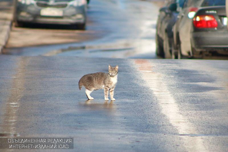 семирный день кошек отпразднуют в библиотеке имени Симонова