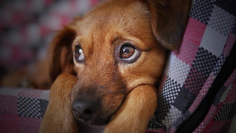 собака, пиксибей, 0203