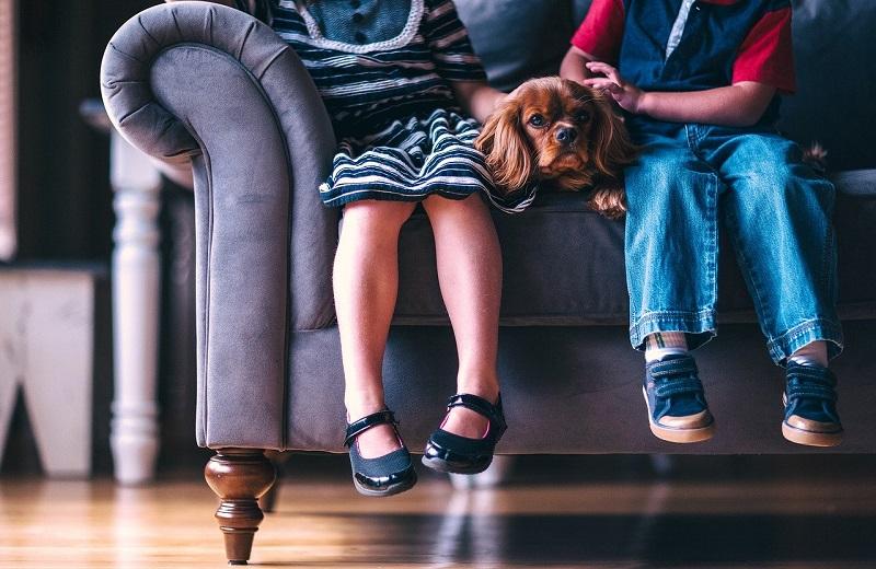 диван, дети, собачка, пиксибей, 0304